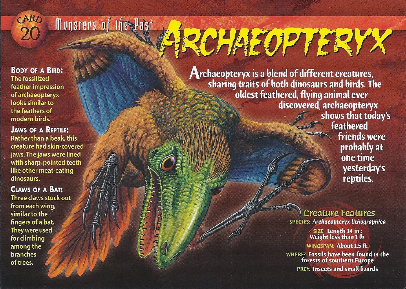 Documents Utiles Aux Gologues Palontologie Walrus Diagram Pinnipeds Pinterest Anatomy And Google Archaeopteryx Lithographica