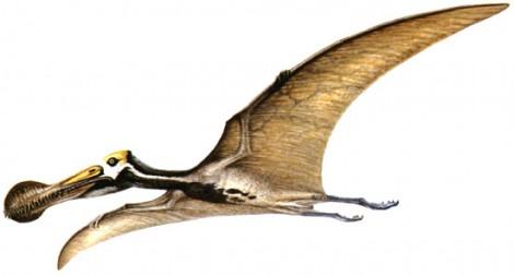 Cliparts dinosaures - Dinosaur volant ...